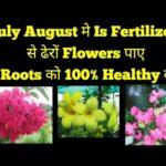 Monsoon/बारिश मे ढेरों फूल लाने के लिए यह Fertilizer Daliye साथ मे जड़ों को भी Healthy करे,
