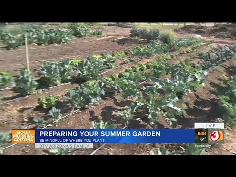 How to prepare your garden for Arizona summers