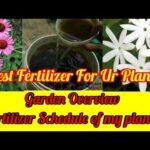 Sunday Update Garden Overview मेरे पौधों का Fertilizer Schedule Best Fertilizer For Plants