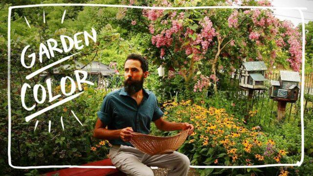 Grow Color in you Vegetable Garden – Growing Zinnia and Marigold