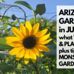 ARIZONA GARDEN in JULY: What TO DO & PLANT – plus tips for MONSOON GARDENING