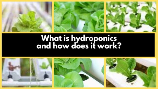 Hydroponics Farming (soilless method): What is hydroponics and how does it work?
