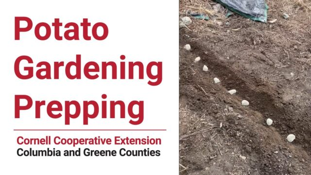 Master Gardener Volunteers: Potato Gardening Prepping
