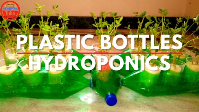 DIY Hydroponics: How to build a Hydroponics system with Plastic Bottles for Balcony Garden (2020)