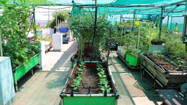 காய்கறிகளை விலைக்கு வாங்கியதே இல்லை! அழகான மாடித்தோட்டம் – Beautiful Terrace Garden
