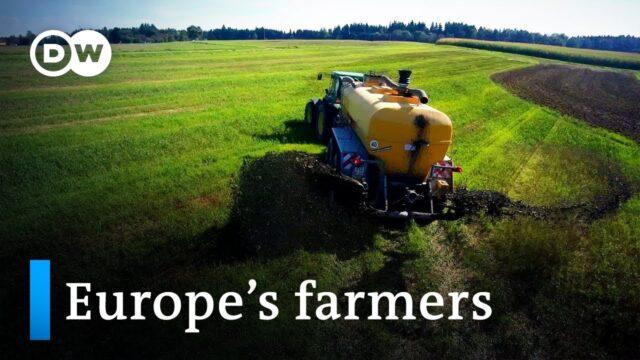 Can farmers grow money?   DW Documentary