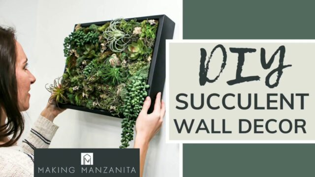 DIY Succulent Wall Decor | EASY CRAFT PROJECT