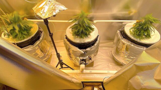 DIY DWC Hydroponics Setup Walkthrough (Recirculating – RDWC)