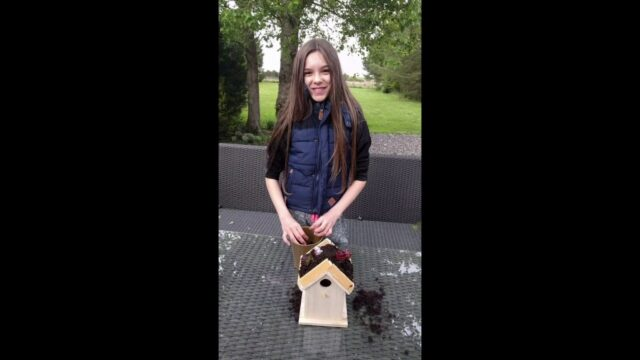 Gardening with children: How to make a living roof bird house