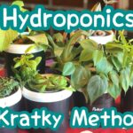 Urban Gardening- Hydroponics, Kratky Method -Part 5