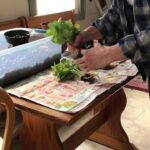 How to make a soil plant a hydroponic plant