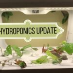 Hydroponic Growing System Update | Greenjoy Hydroponics System