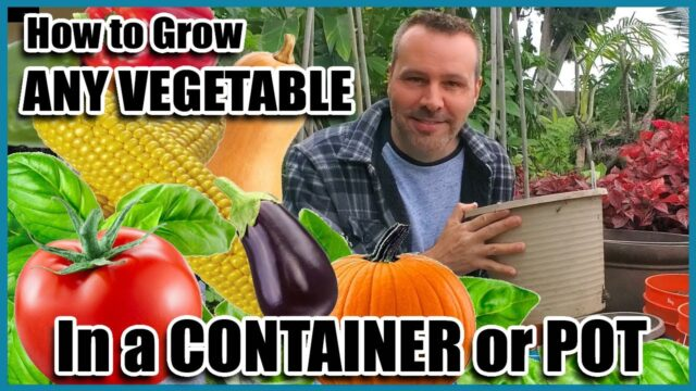 How to Grow Vegetables in Containers // Container Gardening // Self Sufficient Sunday!