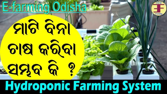 Hydroponic Farming System in Odia(Soil-less farming).