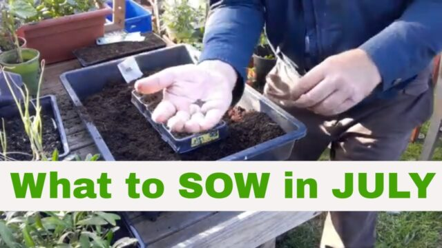 ✅ What SEEDS to SOW in July on your Allotment Vegetable Gardening uk