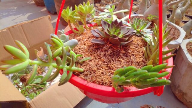 How to make Succulent's hanging basket at Home