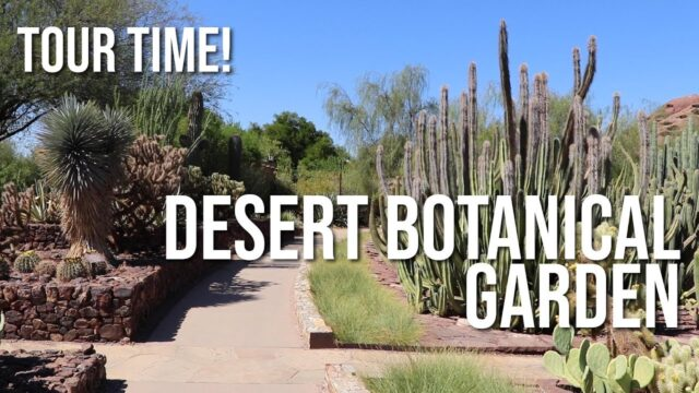 Tour Time! — Desert Botanical Garden in Phoenix Arizona