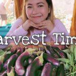 Harvest Sa Vegetable Garden.