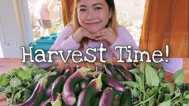 Harvest Sa Vegetable Garden.