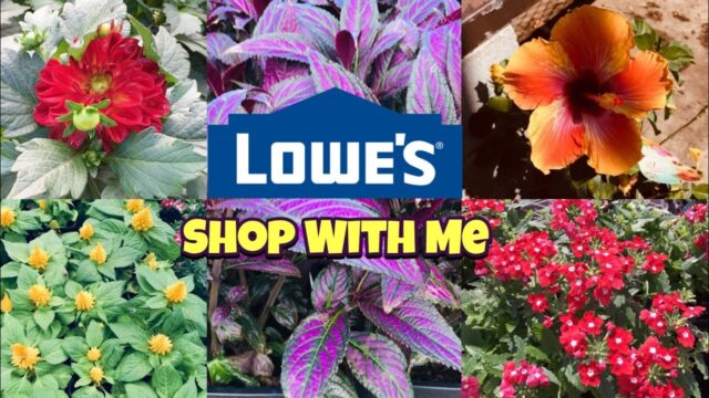 Lowes SHOP WITH ME Garden Department Beautiful flowers!