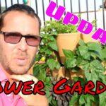 Greenstalk Tower Garden Update!