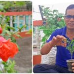 Roof Gardening- Anaar/ Pomegranate plant on roof | छत पर अनार की बागवानी | Home Gardening 🌱