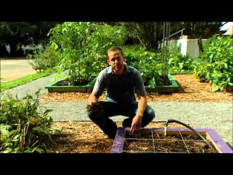 Fresh for Florida Kids Food Garden – Weeding the Garden