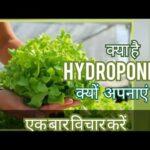 What is Hydroponics & it's benefits? हाइड्रोपोनिक्स क्या है? इसकी उपयोगिता क्या है?