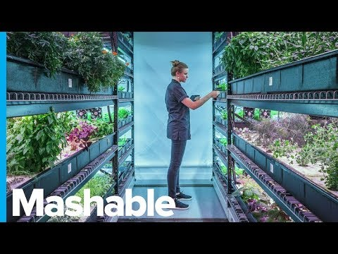 This Underground New York City Farm Grows Rare Edible Plants — What's in the Basement?