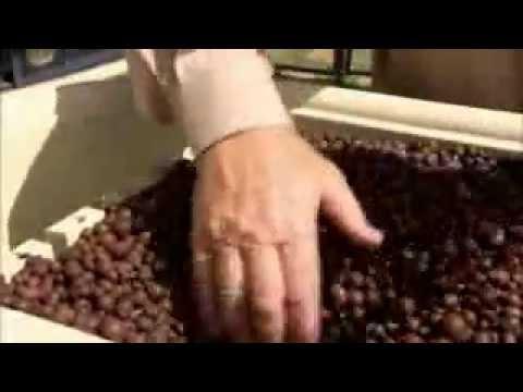 The Garden Gurus – Hydroponic Herbs