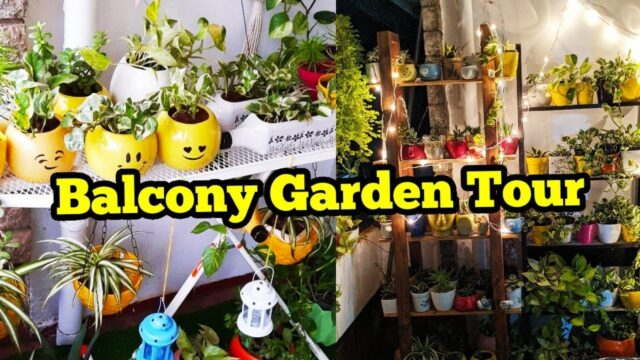 Balcony garden Tour/succulents care/Makeover garden/Hanging plants/Indoor plants/Salu Koshy/Garden