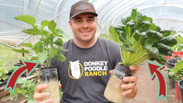 Growing Tons of Vegetables in Water! Hydroponic Growing!