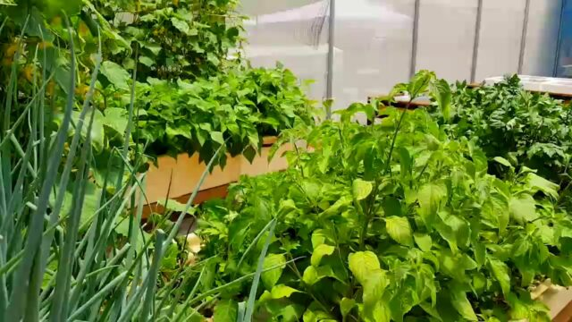 Aquaponics: Before and After