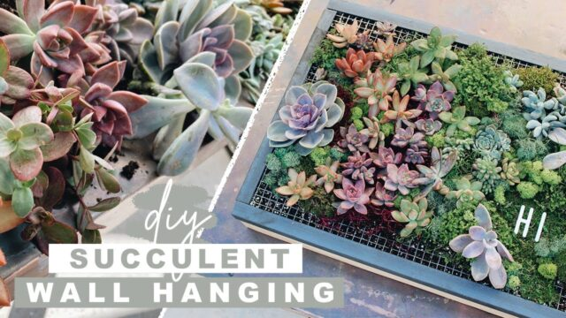 DIY Succulent Wall Planter | Easy Woodworking Project