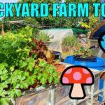 Backyard Farm Tour | Aquaponics, Wicking Beds & Oyster Mushrooms