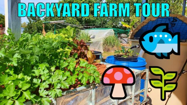 Backyard Farm Tour | Aquaponics, Wicking Beds & Oyster Mushrooms