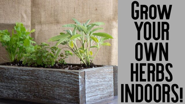 Indoor Herb Garden Unboxing- Grow Your Own Fresh Herbs- Very Easy and Inexpensive