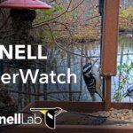Live Birds In 4K! Cornell Lab FeederWatch Cam at Sapsucker Woods