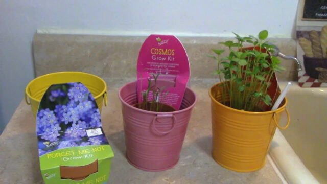 How to Grow Flowers From a Grow Kit- Review