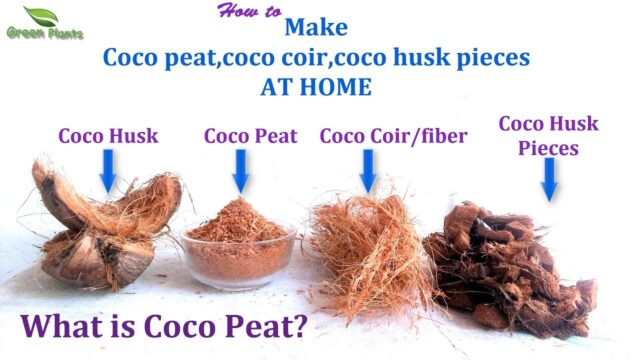What is Coco peat? & How to Make Coco peat at Home Quick&Easy Way | Best Growing Media//GREEN PLANTS