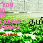அக்வாபோனிக்ஸ் குறைகள் மற்றும் தீர்வுகள் என்ன? |DISADVANTAGES of Aquaponics|Tamil Version