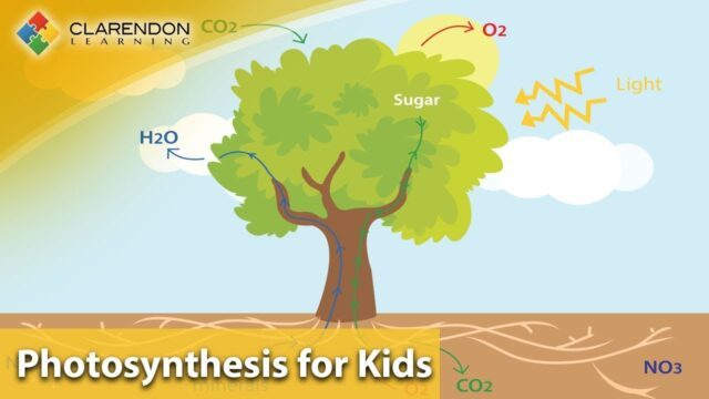 Photosynthesis for Kids | Learn how plants MAKE their own food