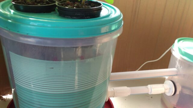 Low and High pressure aeroponics system update as on 25 december. Things are getting exciting.