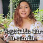 Vegetable Garden Sa Manila.