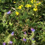 Bauder Green Roof Wildflower Blanket