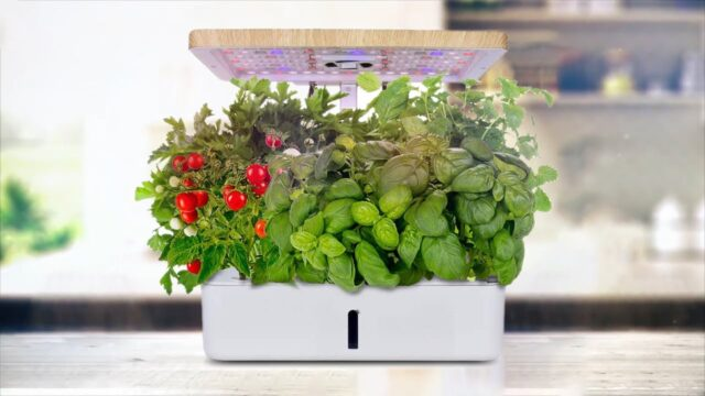 Moistenland Hydroponics Growing System,Indoor Herb Garden Starter Kit w/LED Grow Light