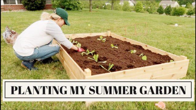 BUILDING RAISED BEDS + TRANSPLANTING SEEDLINGS | Organic Vegetable Gardening | Becca Bristow