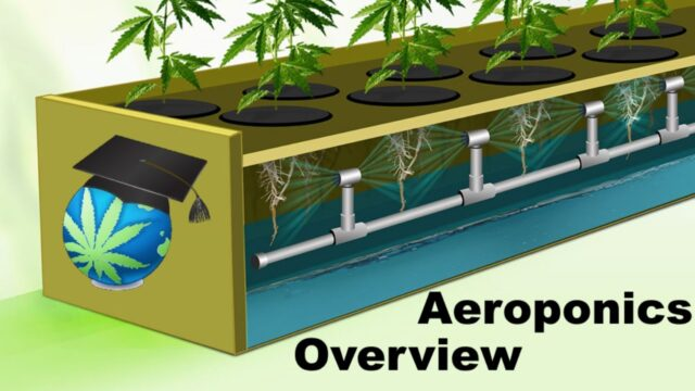 Aeroponics Overview – Setups, Advantages & Shortcomings For Cannabis Growers