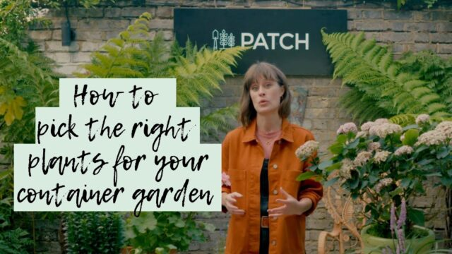 How to pick the right plants for your container garden 🌱🌳