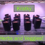 Planting 11 Herbs and Vegetables Hydroponically (Kratky Method)